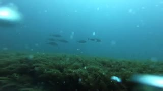 Diving Offshore NC